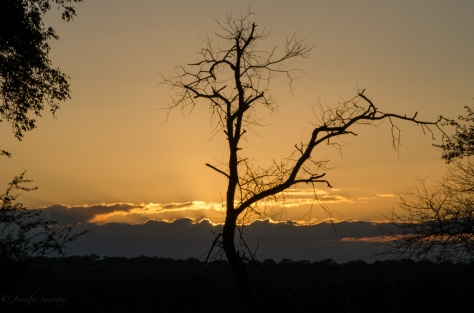 Game Drive Sunset, April 2013