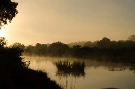 Sunrise on my last game drive at Londolozi (for now) 1/1250sec, f9.0, ISO200, 55mm
