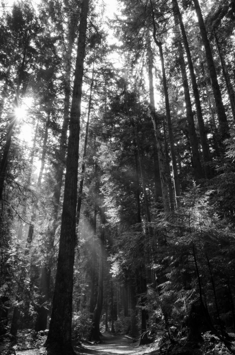 Pacific Spirit Park - Sun in the trees