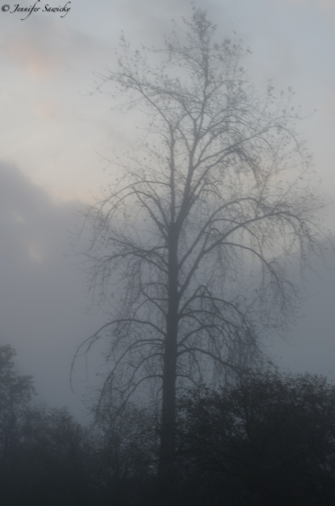 Foggy Tree 2