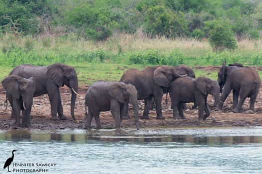I took a morning boat trip on the Jozini Dam and was lucky enough to see a breeding herd of elephants :) Happy happy Jen!!!