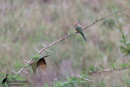 While the female look away, the male sneaks off. 1/400 sec, f5.6, ISO 1000