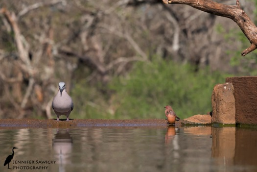 """The look on their faces! """"OMG he's huge!"""" 1/1250 sec, f8.0, ISO 1250"""