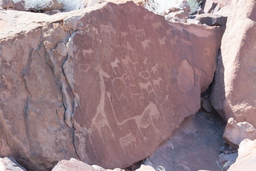 Some of the amazing rock engravings at Twyfelfontein.  They estimate that the San bushman carved these images between 2000-6000 years ago.  The sandstone has broken up, and the panels are no longer in the original positions.