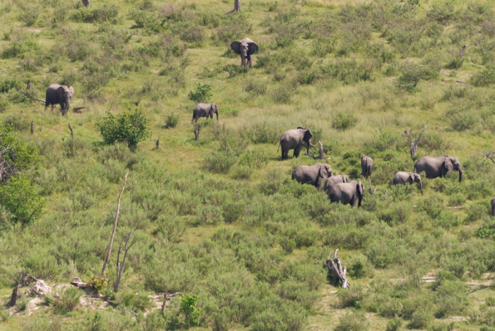 A herd of elephants from above.