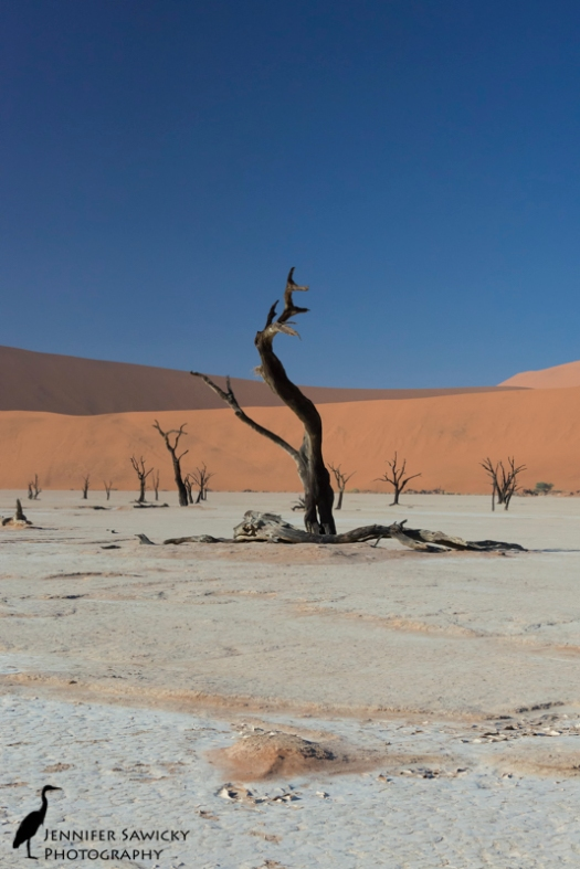 Dead Vlei was a place of amazing beauty.  The colours were so intense, the landscape so surreal; a photo can't really do it justice, but it's all I've got until I have the chance to go back someday.  You can be certain you'll see a few more photos from this gorgeous place.