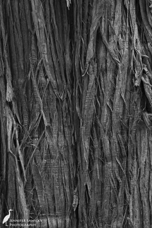 A close-up of cedar bark.