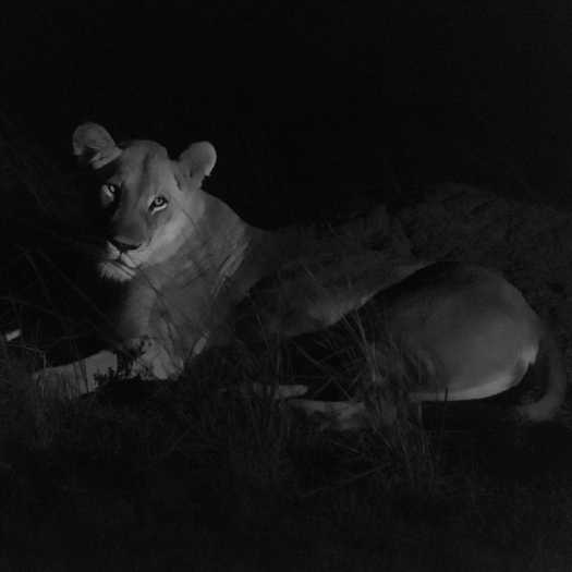 20150805_Lions at night-8