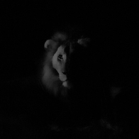 20150805_Lions at night