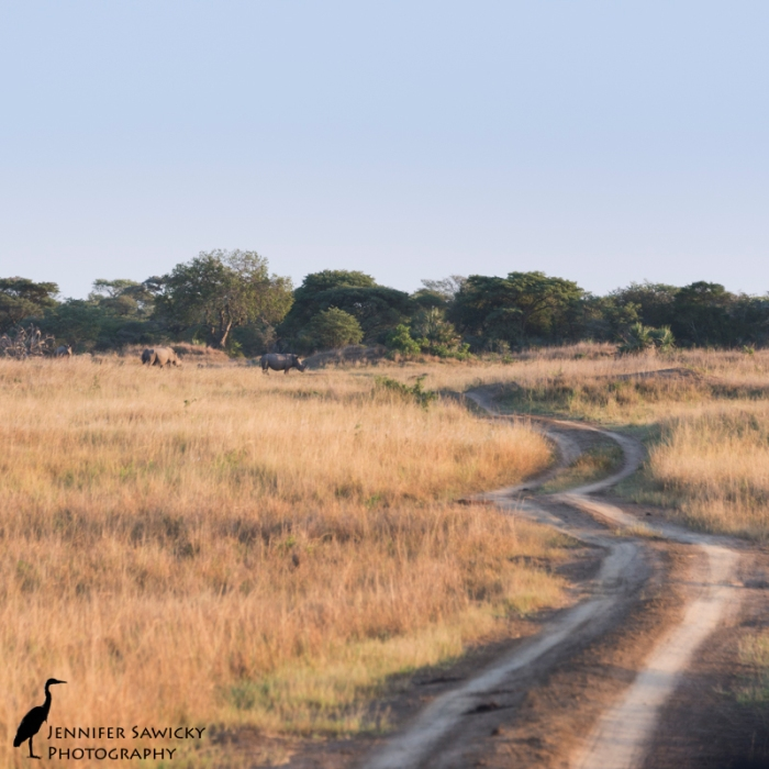 A crash of rhino at a bend in the road. Phinda Private Game Reserve, May 2015 1/320sec, f5.6, ISO 640