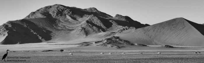 A parade of oryx cross the Sossusvlei desert. Namibia, April 2015. 1/1250sec, f11, ISO 1600