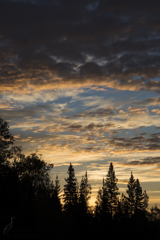 A lovely morning with a very expressive sky.