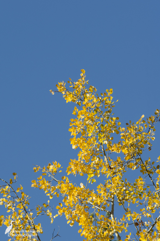 After quite a windy day earlier this week, colourful leaves in my neighbourhood are getting few and far between. 1/320sec, f11, ISO320