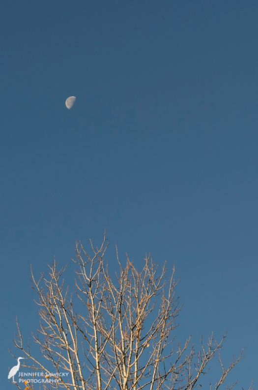 Half moon and about a half dozen leaves. 1/320sec, f11, ISO320
