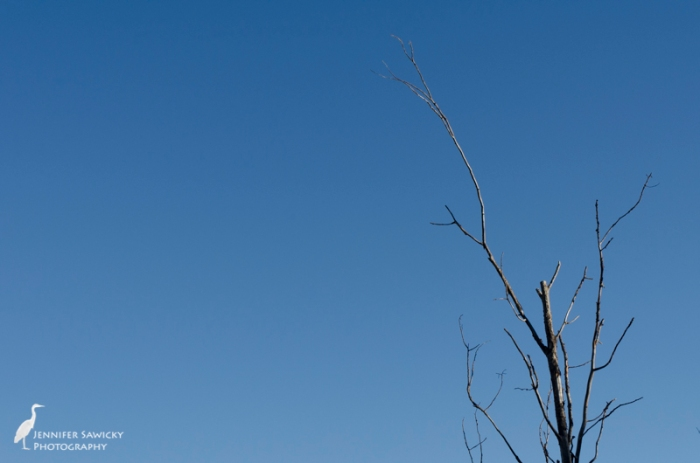 Naked branches reaching into the blue. 1/320sec, F11, ISO320