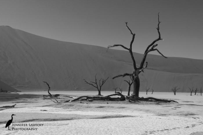 Dead Vlei, Sossusvelei, Namibia