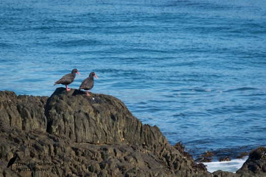 20151229_Birds-2