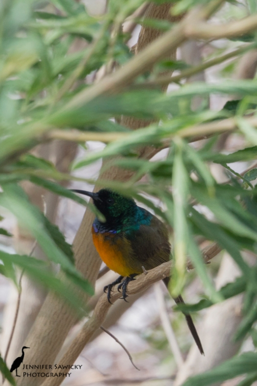 20151229_Birds-5