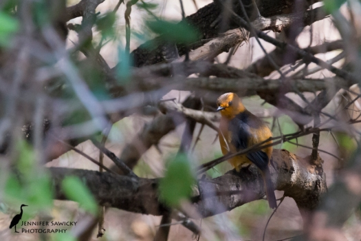 20151229_Birds-7