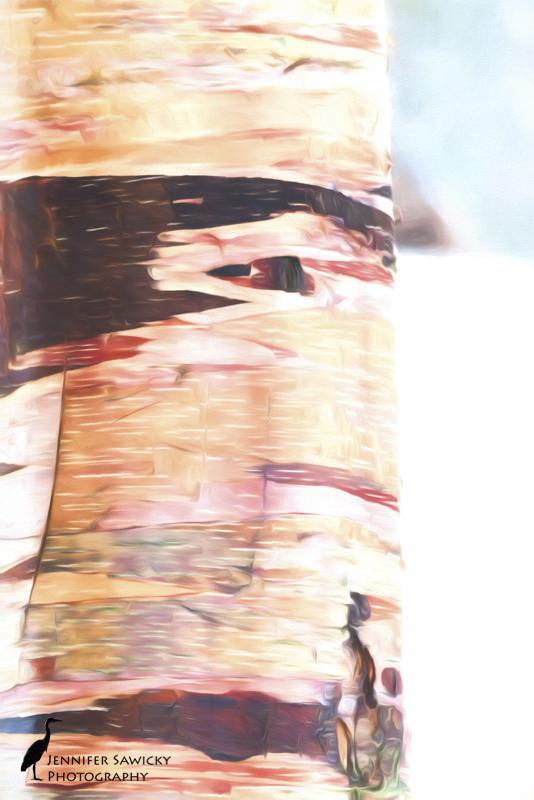 20160215_Artistic Impressions-4