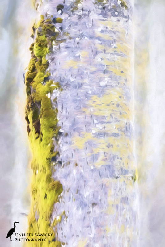 20160215_Artistic Impressions-5
