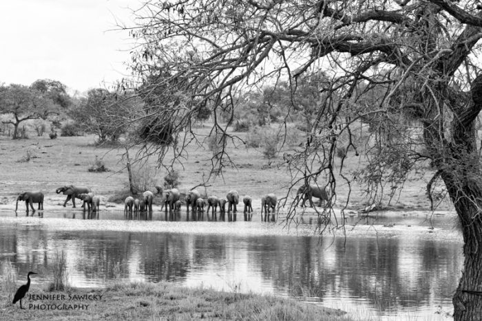 20160303_Elephants-3