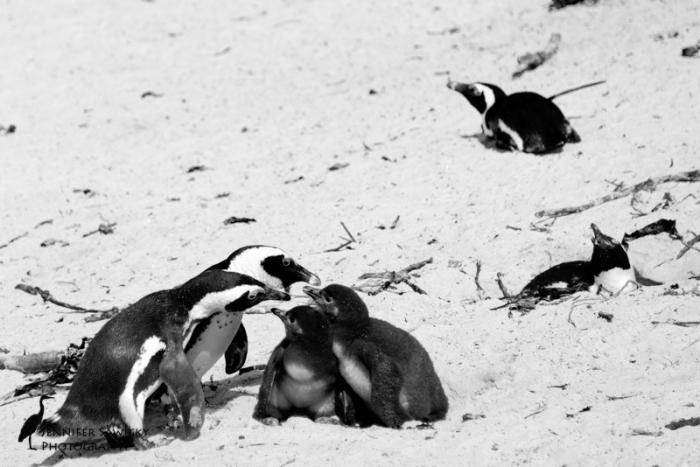 20160306_CB&W Penguins.jpg