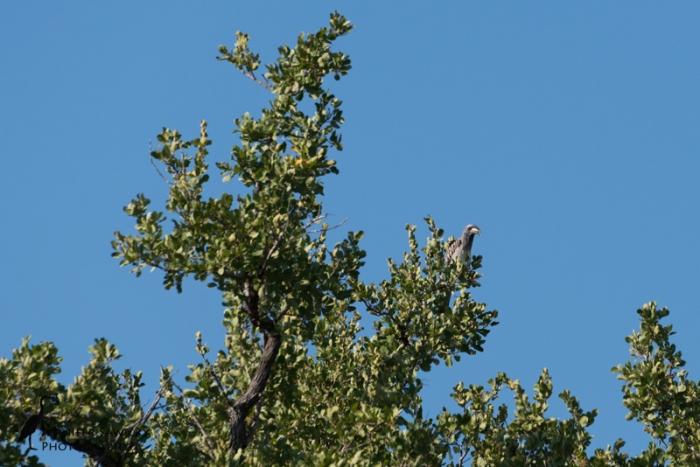 Hornbills-6