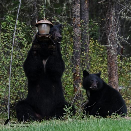 20160829_Bears-2