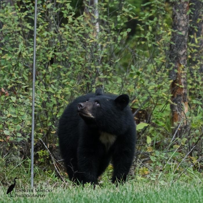 20160829_Bears-3