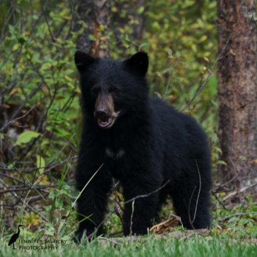 20160829_Bears-5