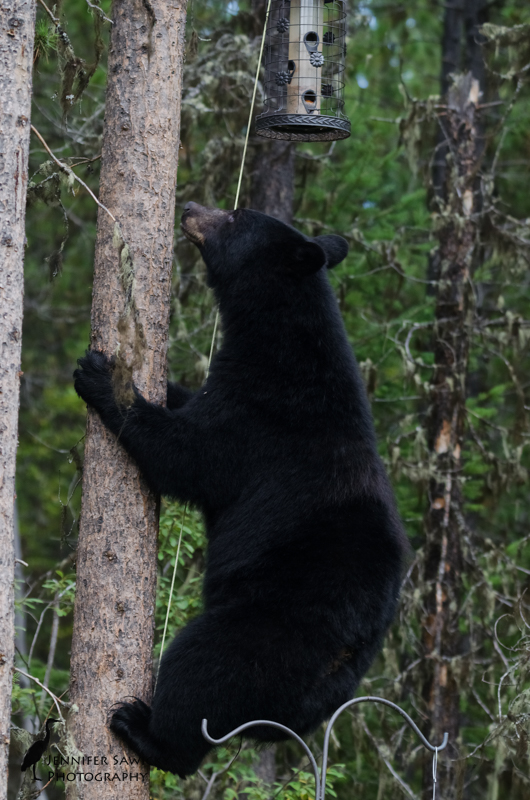 20160829_Bears-6