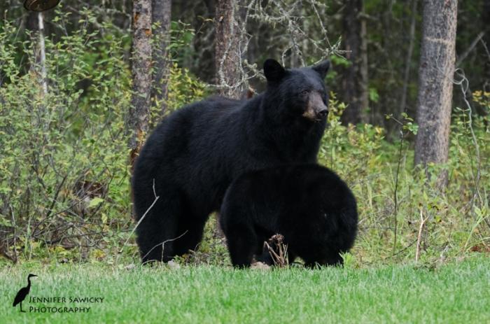 20160829_Bears-7