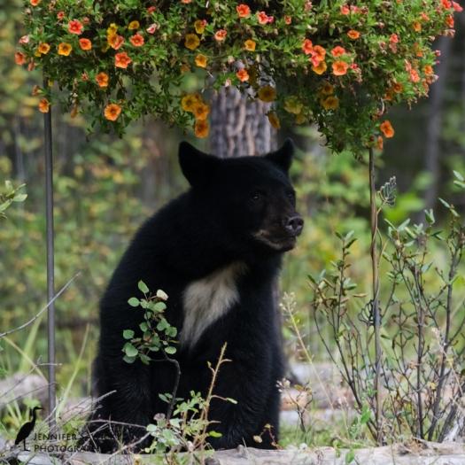 20160829_Bears
