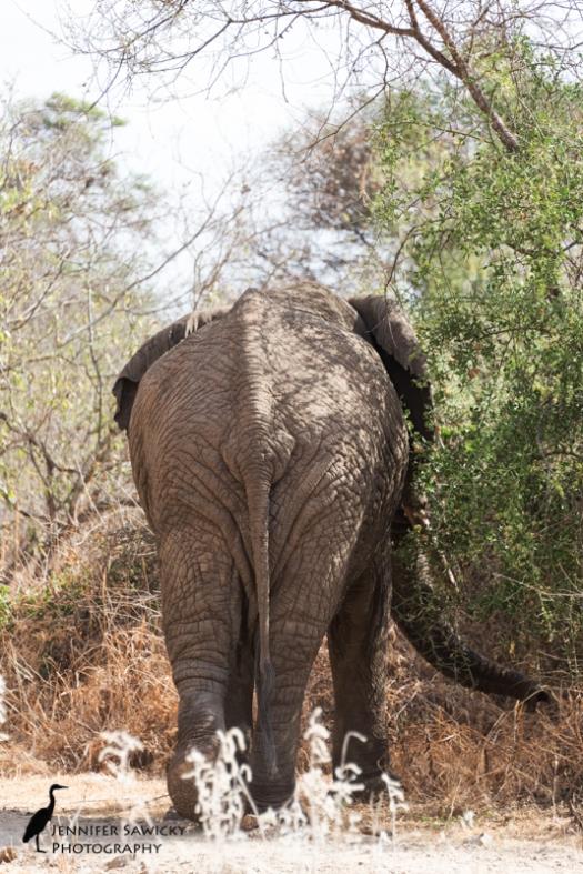 20161002_elephants-2