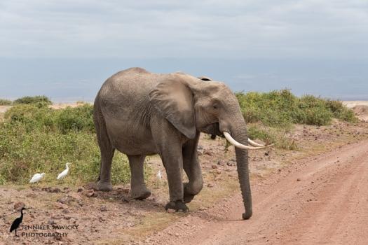 20161002_elephants-4