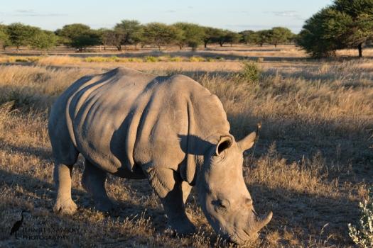20170922_World Rhino Day