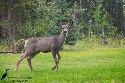 Deer20171001_WeeklyPhotos_DSCF0019