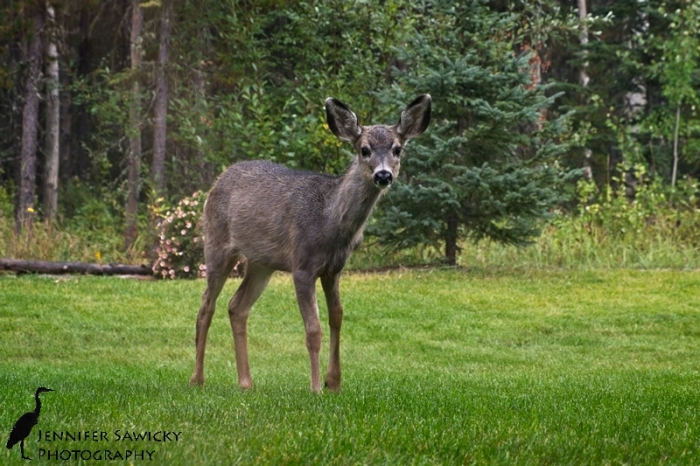 Deer20171001_WeeklyPhotos_DSCF0036
